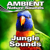 Calm Jungle Background with Gentle Bird Calls