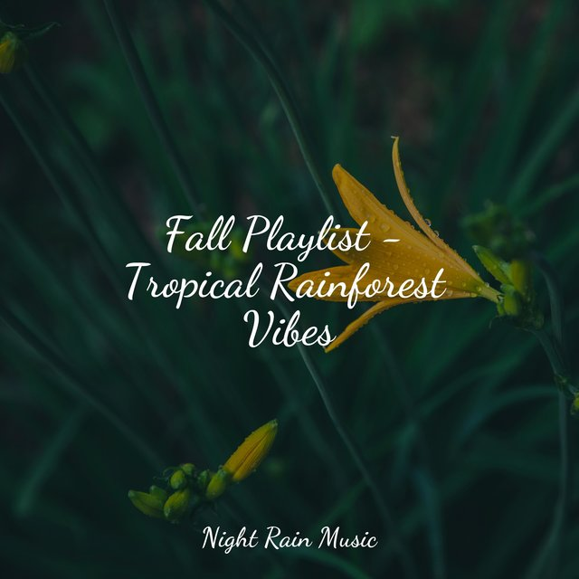 Fall Playlist - Tropical Rainforest Vibes