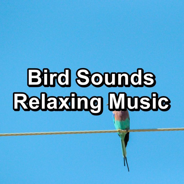 Bird Sounds Relaxing Music