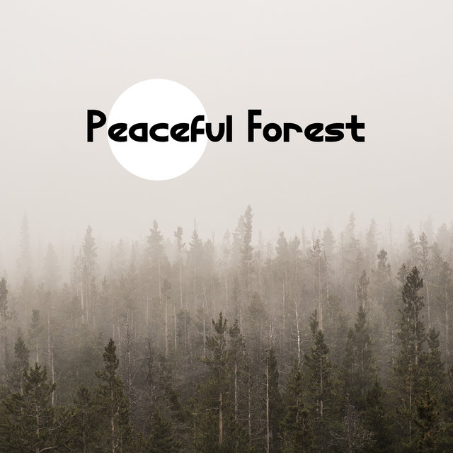 Peaceful Forest - Natural Mindfulness Training, Animals & Nature, Meditation for Your Soul and Body