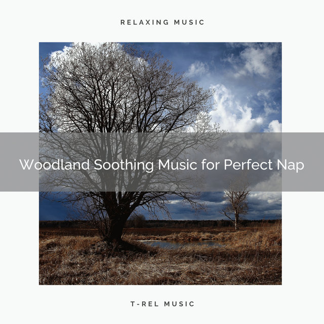 2021 New: Woodland Soothing Music for Perfect Nap
