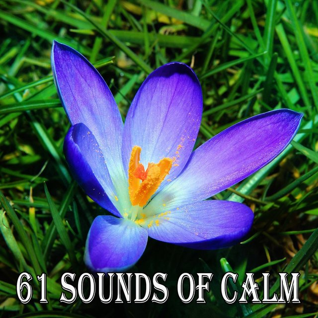 61 Sounds of Calm