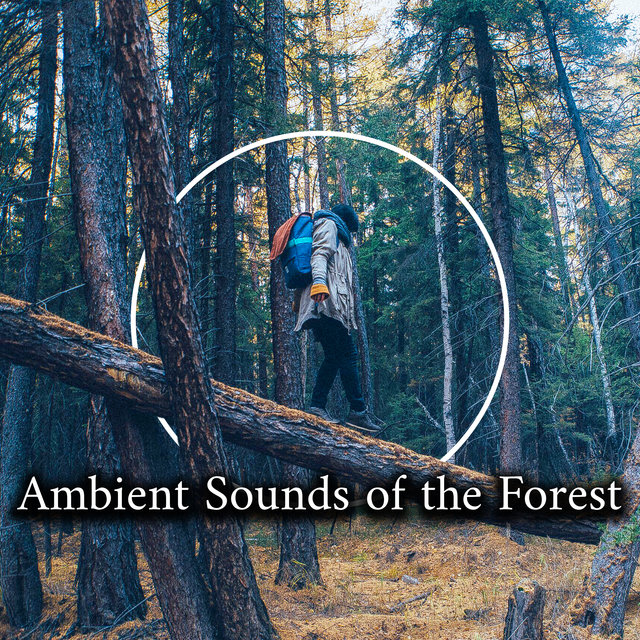 Ambient Sounds of the Forest - Collection of Wonderfully Relaxing Sounds of Birds, Water and Wind, The Greatest Nature Sounds, Healing Therapy, Harmony of Senses, Feel So Good, Relaxation Breeze
