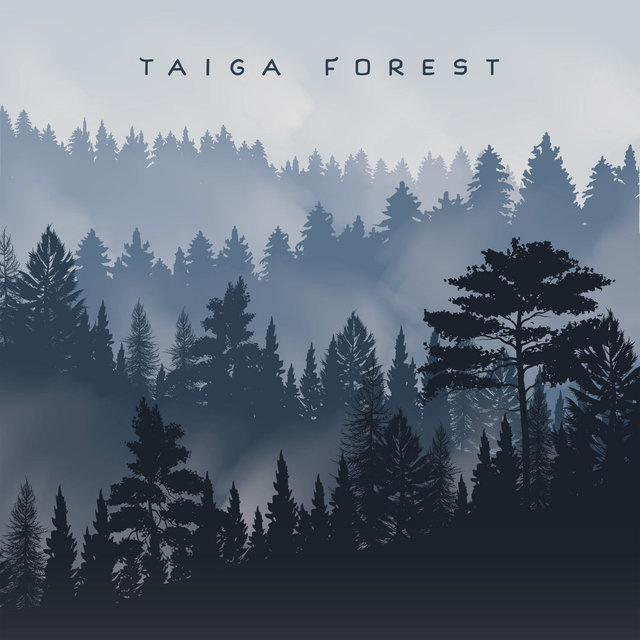 Taiga Forest: Relaxing Nature, Gentle Ambient Melodies, Sounds of the Forest, Chirping of Birds, Water Noise