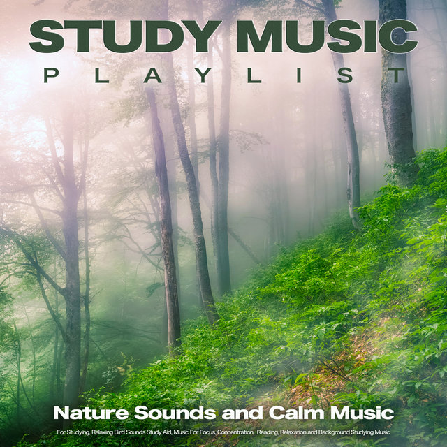 Study Music Playlist: Nature Sounds and Calm Music For Studying, Relaxing Bird Sounds Study Aid, Music For Focus, Concentration,  Reading, Relaxation and Background Studying Music