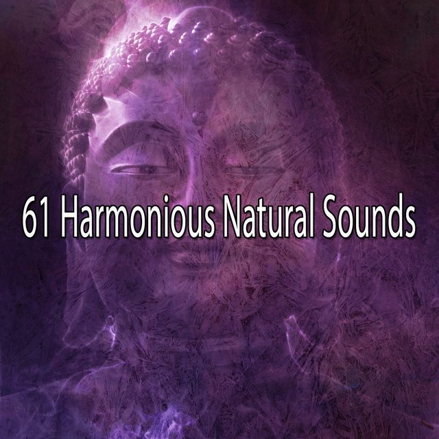 61 Harmonious Natural Sounds