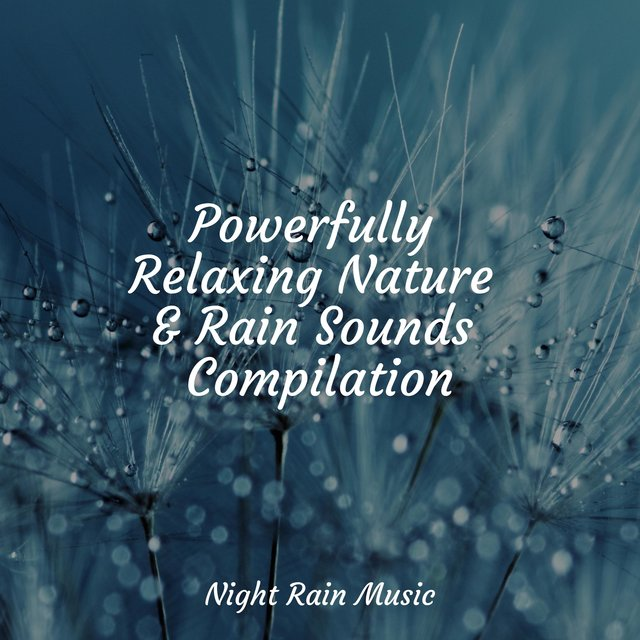 Powerfully Relaxing Nature & Rain Sounds Compilation