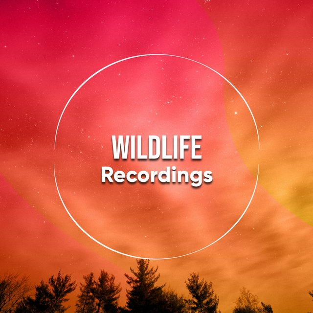Background Garden Wildlife Recordings