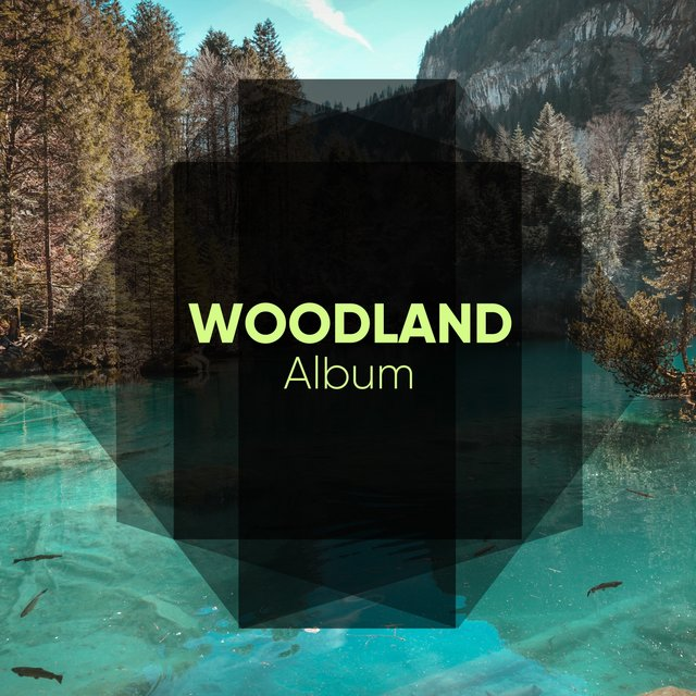 Peaceful Native Woodland Album