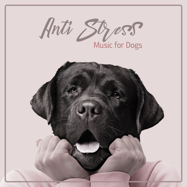 Anti Stress Music for Dogs