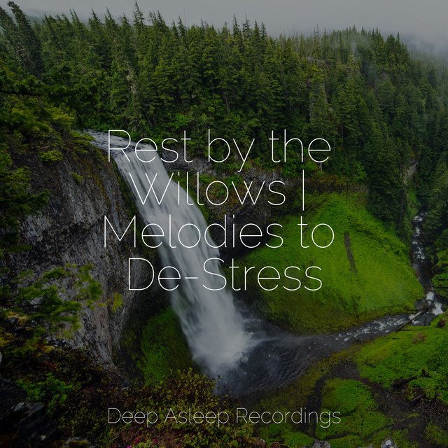 Rest by the Willows | Melodies to De-Stress
