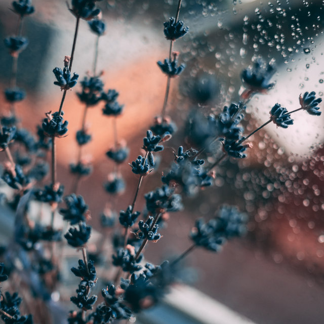 50 Simply Soothing Rain Loops & Water Sounds