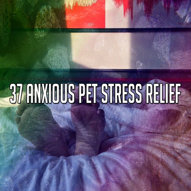 37 Anxious Pet Stress Relief