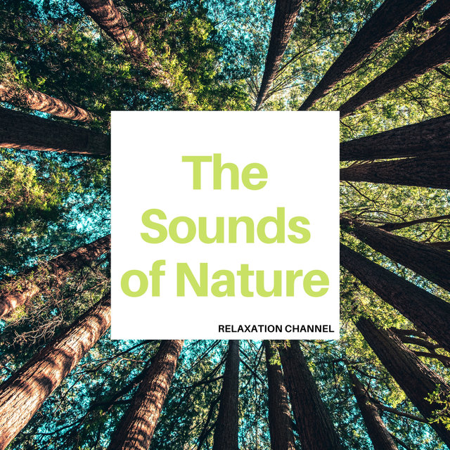 The Sounds of Nature