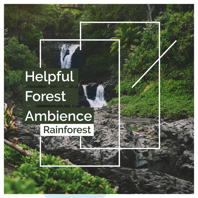 Helpful Forest Ambience