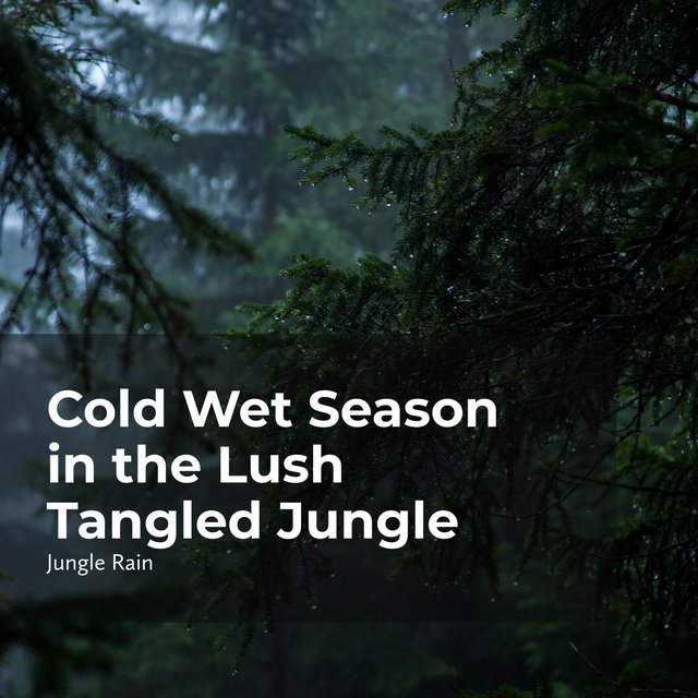 Cold Wet Season in the Lush Tangled Jungle