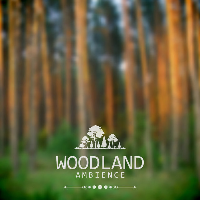 Woodland Ambience – Relaxing Sounds of Nature, Singing Forest Birds, Music for Moments of Relaxation and Rest, Gentle Piano Melodies in the Background of Nature