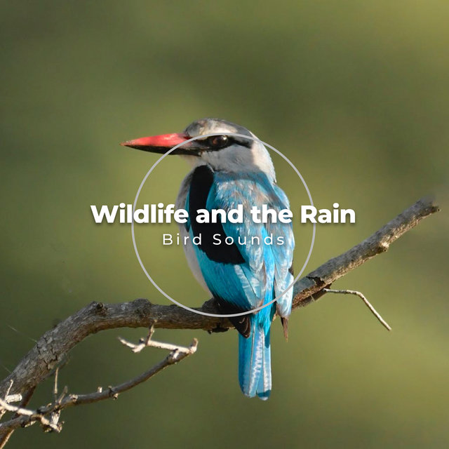 Wildlife and the Rain