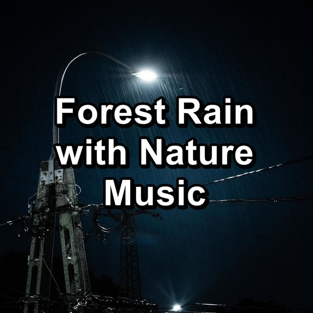 Forest Rain with Nature Music