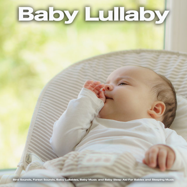 Baby Lullaby: Bird Sounds, Forest Sounds, Baby Lullabies, Baby Music and Baby Sleep Aid For Babies and Sleeping Music