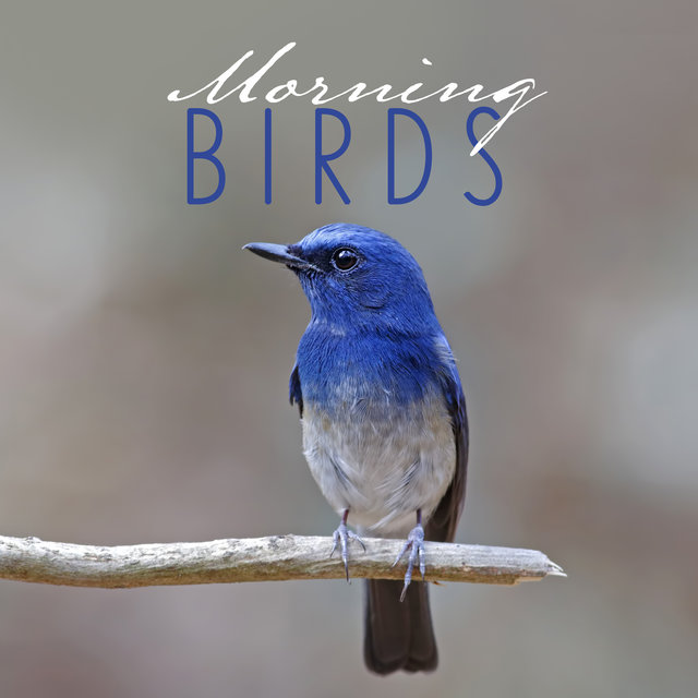 Morning Birds – Relaxing Sounds of Nature for a Good Start of the Day