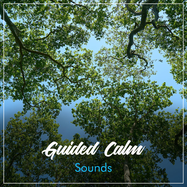 #5 Guided Calm Sounds for Relaxation & Mindfulness