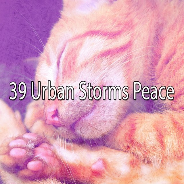 39 Urban Storms Peace