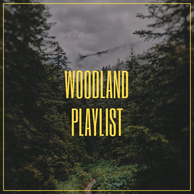 Gentle Native Woodland Playlist