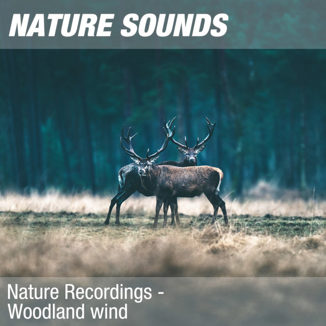 Nature Recordings - Woodland wind