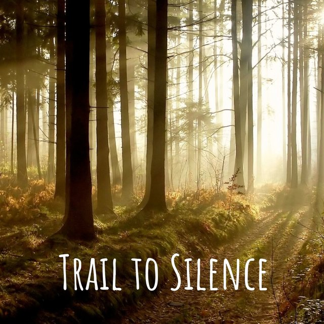 Trail to Silence