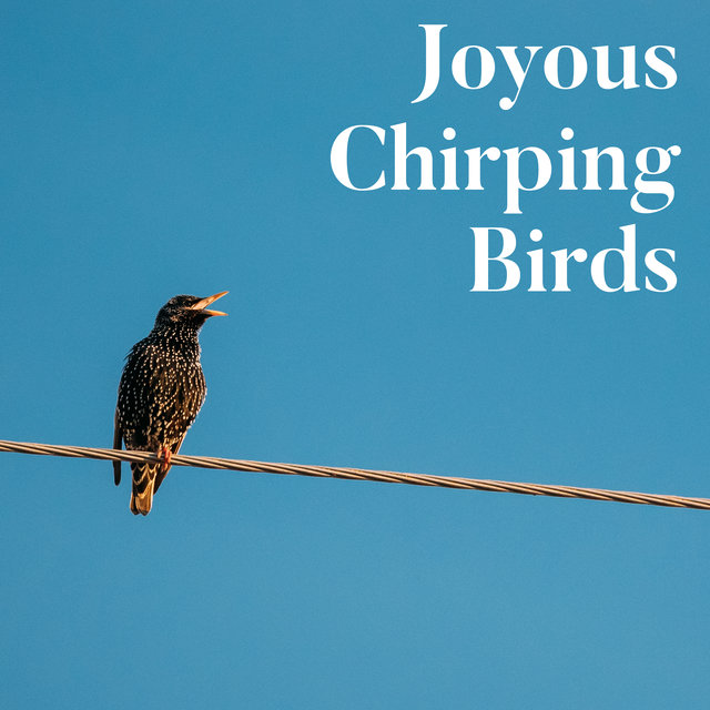 Joyous Chirping Birds - Forest Relaxing Sounds, Birds, Healing Therapy Music
