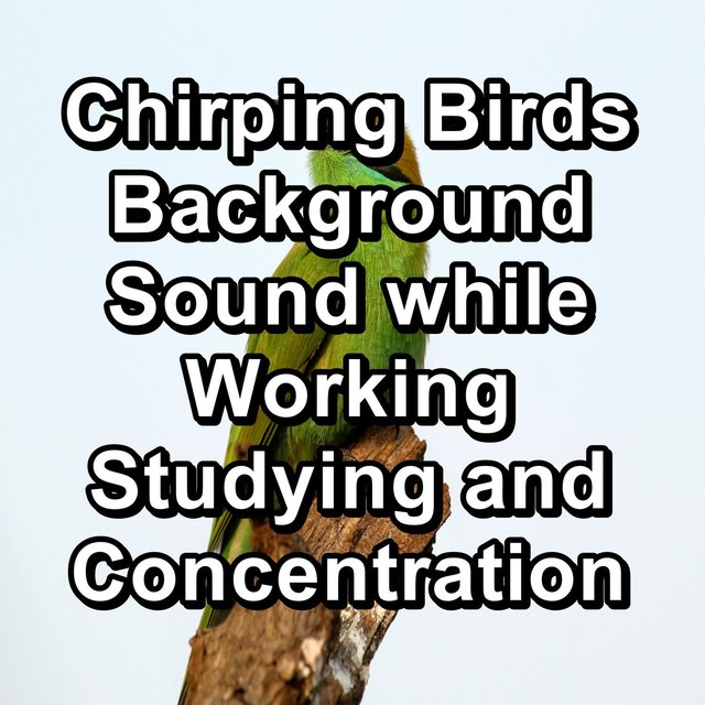 Chirping Birds  Background Sound while Working Studying and Concentration