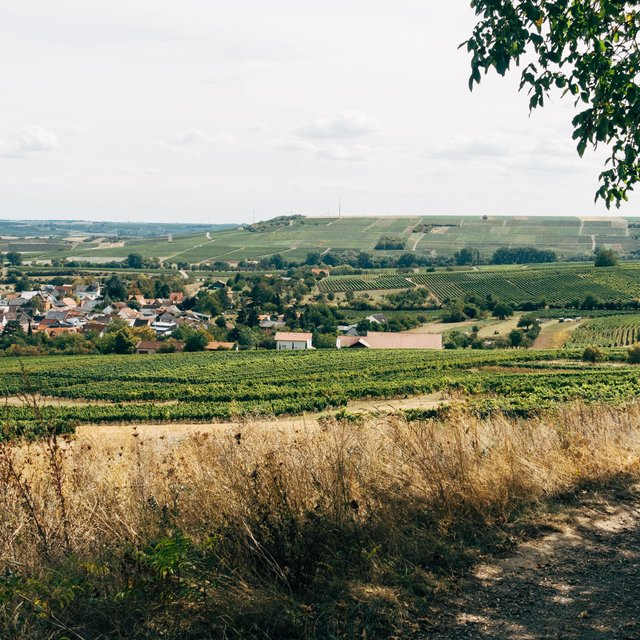Peaceful Ambience for Spa | Bio Energy Healing, Yoga Music