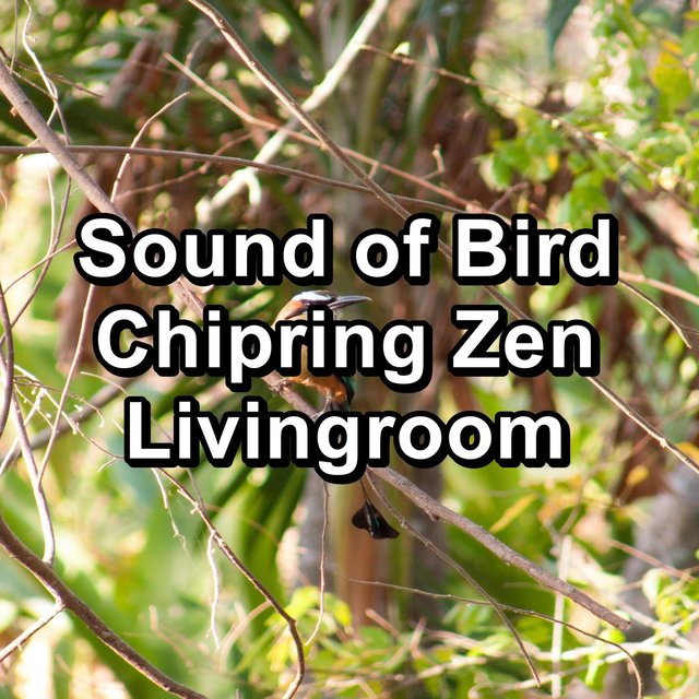 Sound of Bird Chipring Zen Livingroom