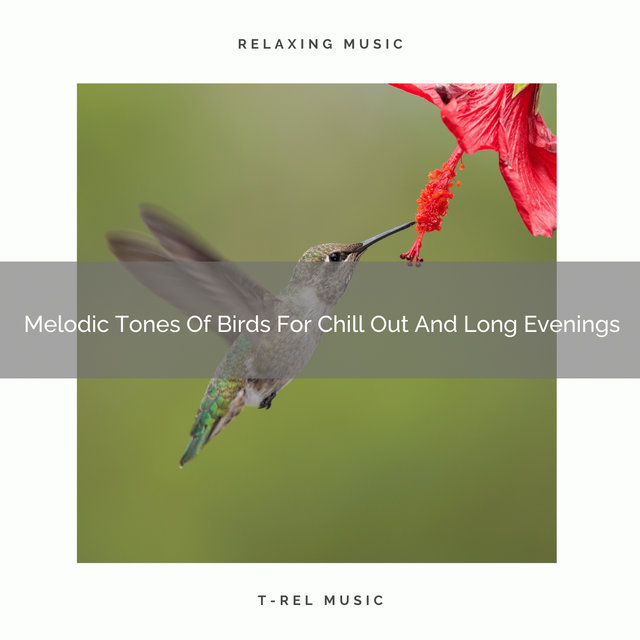 2020 Best: Melodic Tones Of Birds For Chill Out And Long Evenings