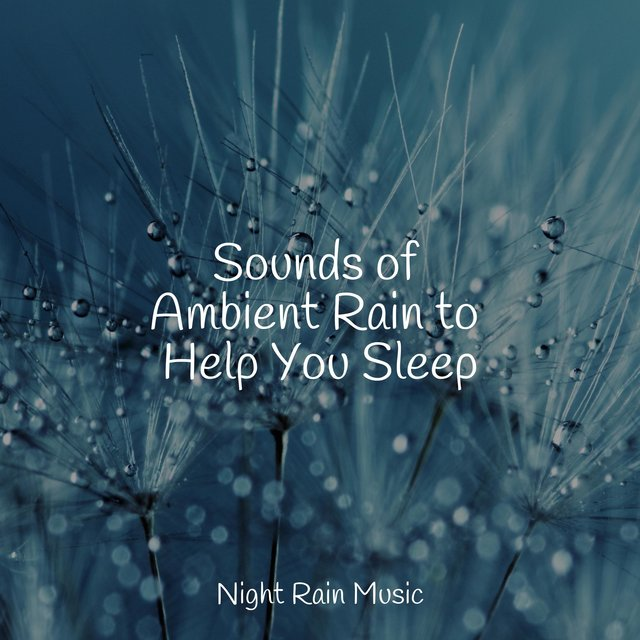 Sounds of Ambient Rain to Help You Sleep