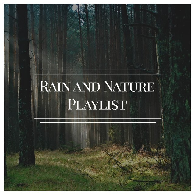 Reflective Natural Rain and Nature Playlist