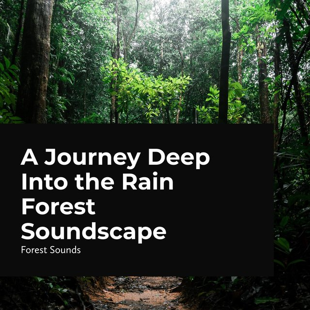 A Journey Deep Into the Rain Forest Soundscape