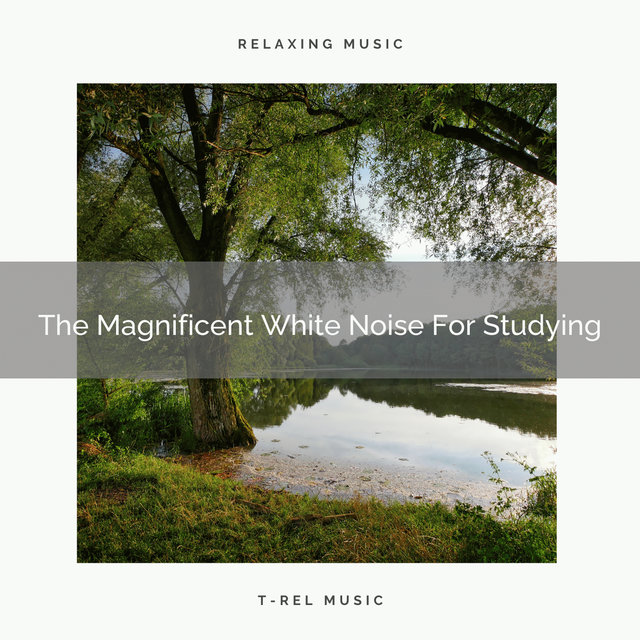 The Magnificent White Noise For Studying