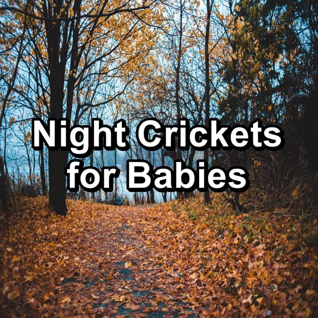 Night Crickets for Babies