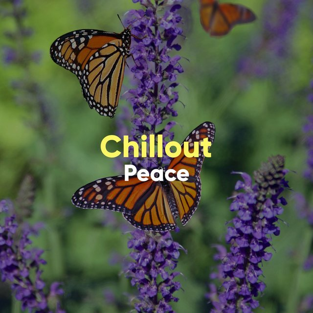 # Chillout Peace