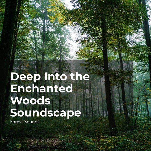 Deep Into the Enchanted Woods Soundscape