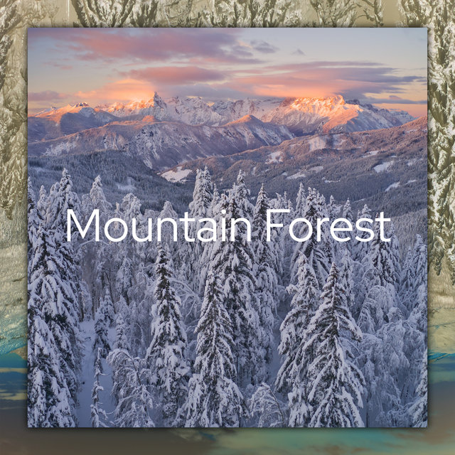 Mountain Forest - Beautiful Nature Sounds for Relaxation