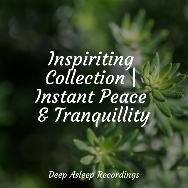 Inspiriting Collection | Instant Peace & Tranquillity