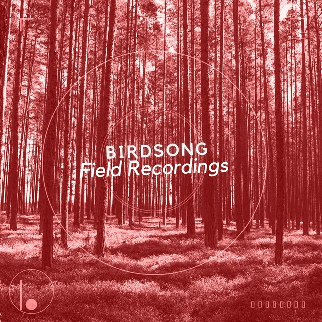 Mellow Tranquil Birdsong Field Recordings