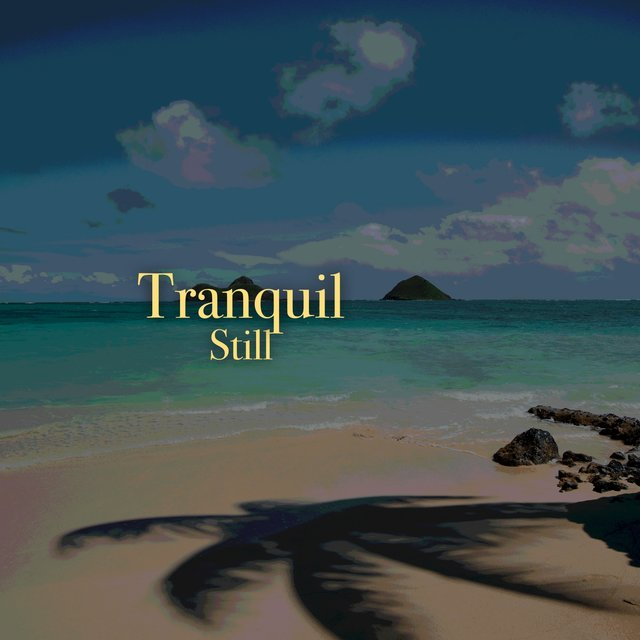 # 1 Album: Tranquil Still