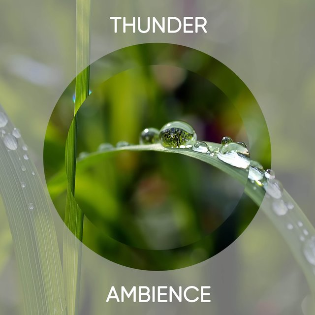 Calming Thunder Relief Ambience
