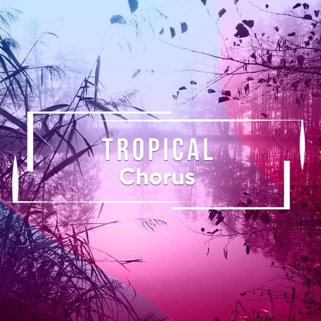 # 1 Album: Tropical Chorus