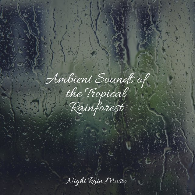 Ambient Sounds of the Tropical Rainforest