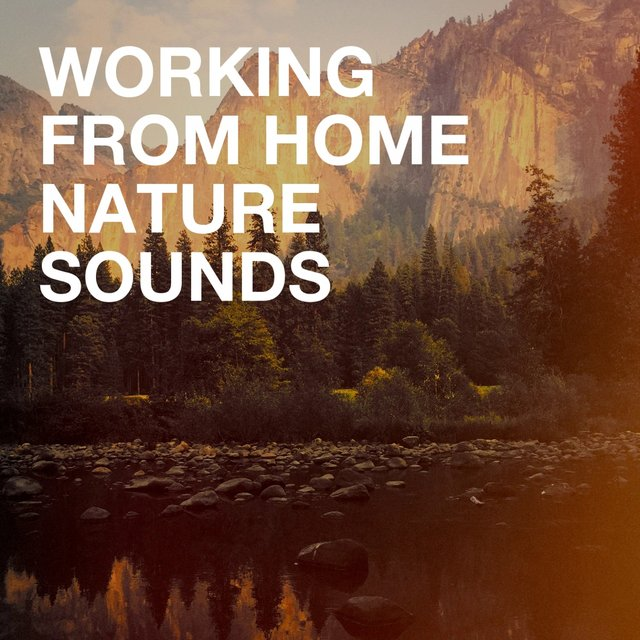 Working from Home Nature Sounds